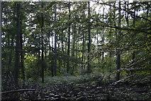 TQ3227 : River's Wood by N Chadwick