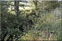 TQ3228 : River Ouse by N Chadwick