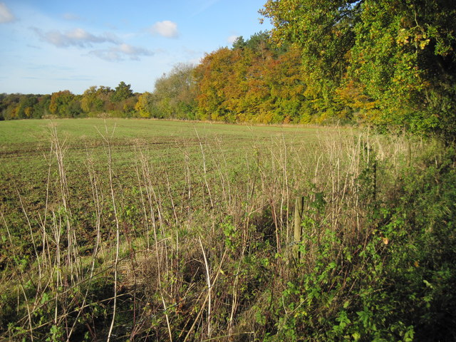 Farmland by Chillandham Lane
