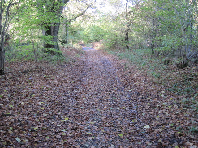 Track alongside Itchen Wood