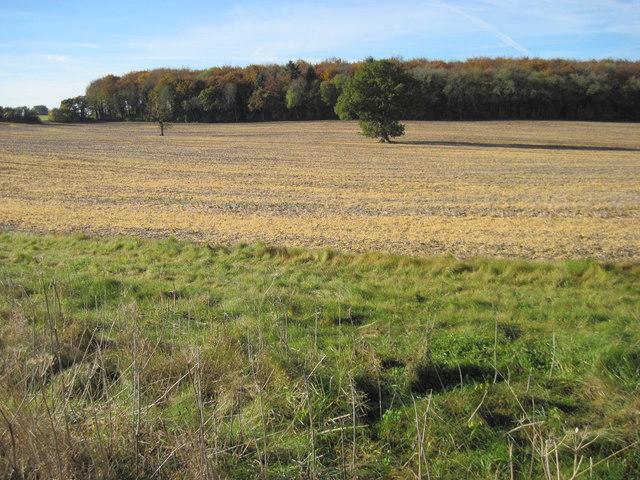 Farmland towards Courtney's Copse