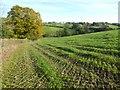 SO6051 : Farmland near Little Cowarne by Philip Halling