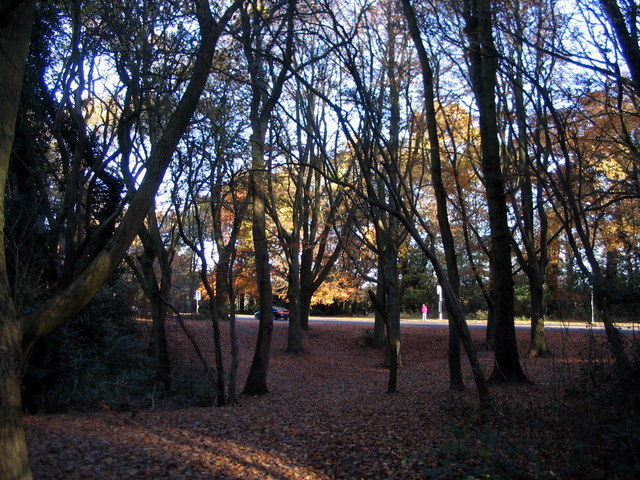 Stivichall Common
