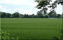 TQ5044 : Arable land near The Slips by N Chadwick