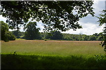 TQ5044 : Grassy meadow by N Chadwick