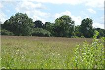 TQ5044 : Meadow by N Chadwick