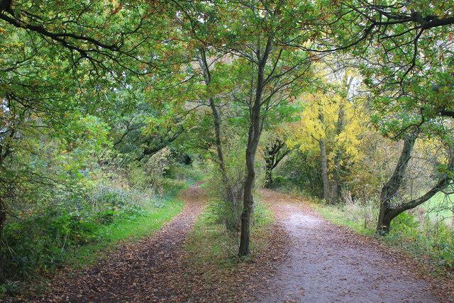 The Wirral Way near Willaston
