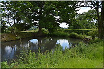 TQ5045 : Pond, Larkin's Farm by N Chadwick