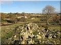 SH9371 : Cae Newydd by Jonathan Wilkins