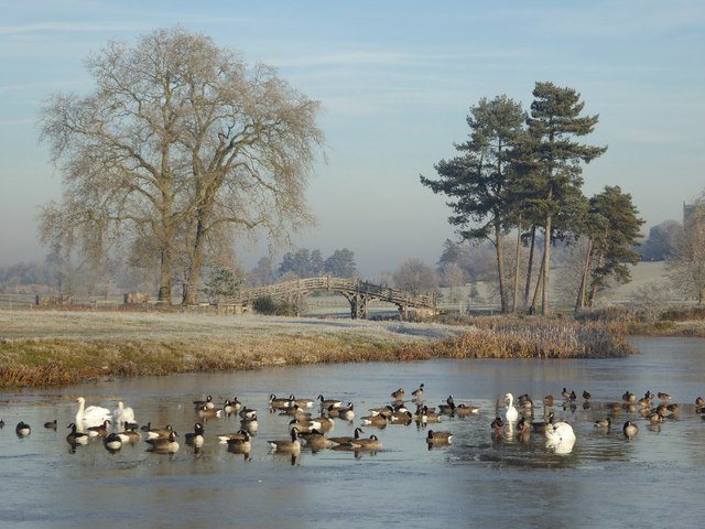 Wildfowl and Croome's Chinese Bridge