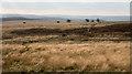 SK2877 : Moorland near to Bucka Hill by Trevor Littlewood