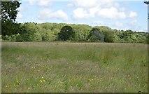 TQ5145 : Meadow on the floodplain by N Chadwick