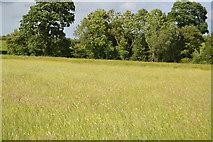 TQ5145 : Grassy meadow by N Chadwick
