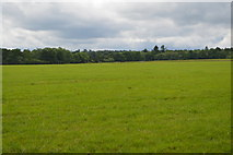 TQ5347 : Grassland by N Chadwick