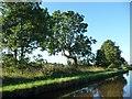 SJ5646 : Damaged tree alongside the Llangollen Canal by Christine Johnstone