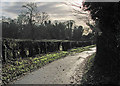 TL4346 : Thriplow: on Farm Lane by John Sutton