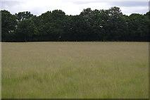 TQ5246 : Meadow by N Chadwick
