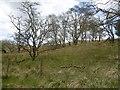 NS5926 : Woodland, River Ayr by Richard Webb