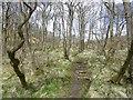 NS5826 : River Ayr Way by Richard Webb