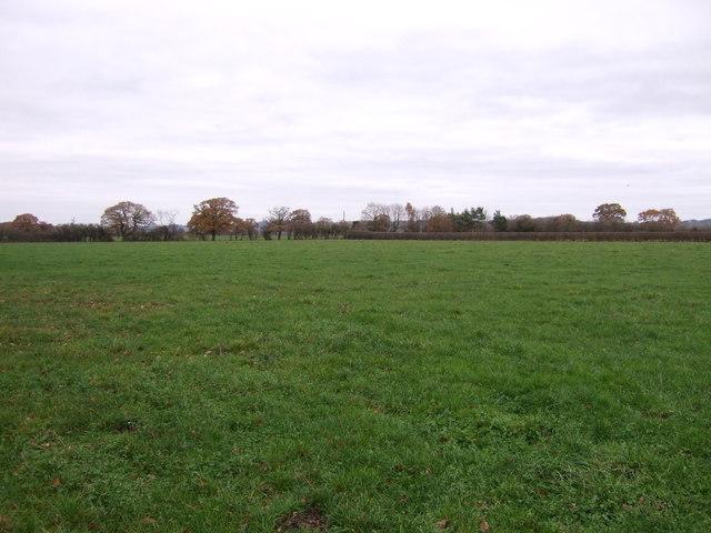 Grazing near Gorse Farm