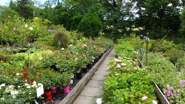 Garden Centre: Deelish Garden Centre, 2 © Jonathan Billinger Cc-by-sa/2.0