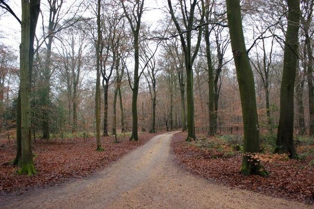 Crossroads of two bridleways, Lower Highmoor