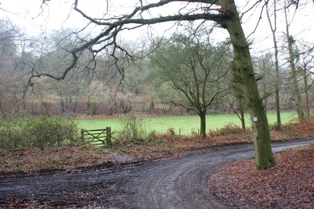 Junction in the bridlepaths, Nettlebed Woods