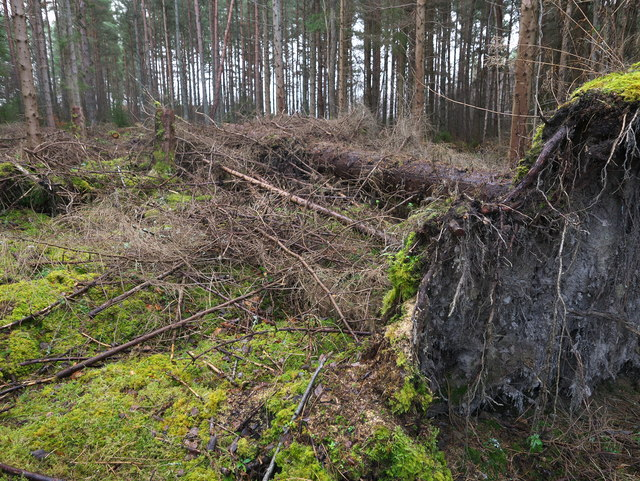 Storm damage, Tullich Wood