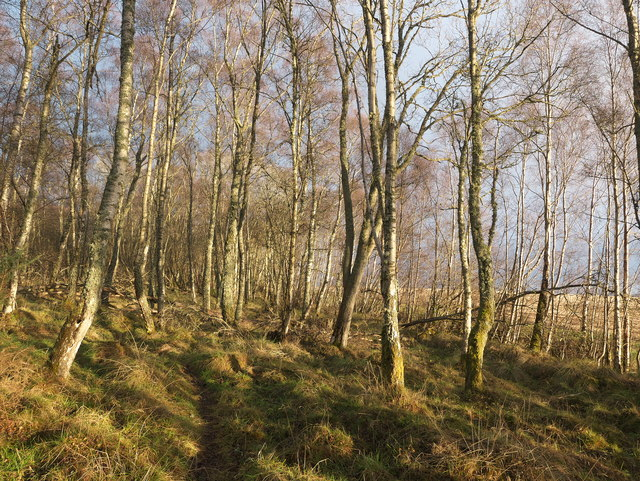 Footpath at the edge of Arkendeith Wood