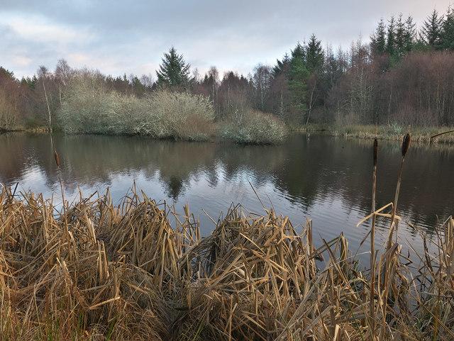 Tarn in Ardenkeith Wood