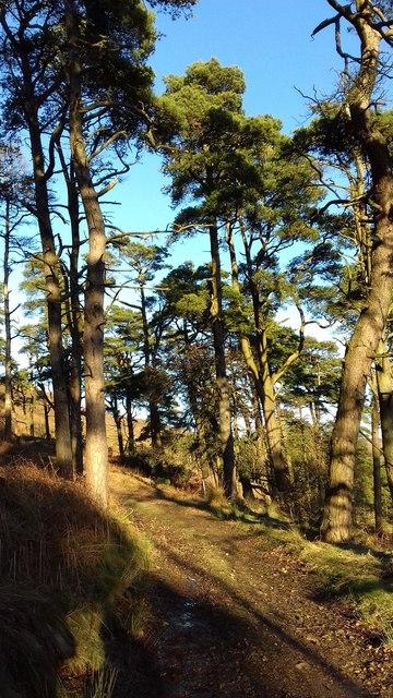 Oakenclough Fell Plantation