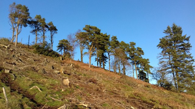 Partially Cleared Plantation on Oakenclough Fell