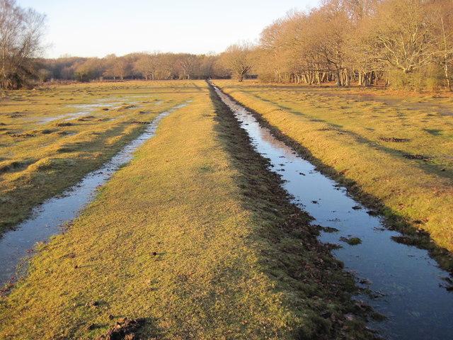 Ditch near Ashurst Wood