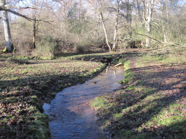 Stream in Mallard Wood