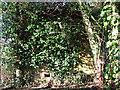 TM3195 : Hidden underneath ivy by Evelyn Simak