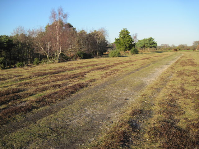 Track beside Longdown Inclosure
