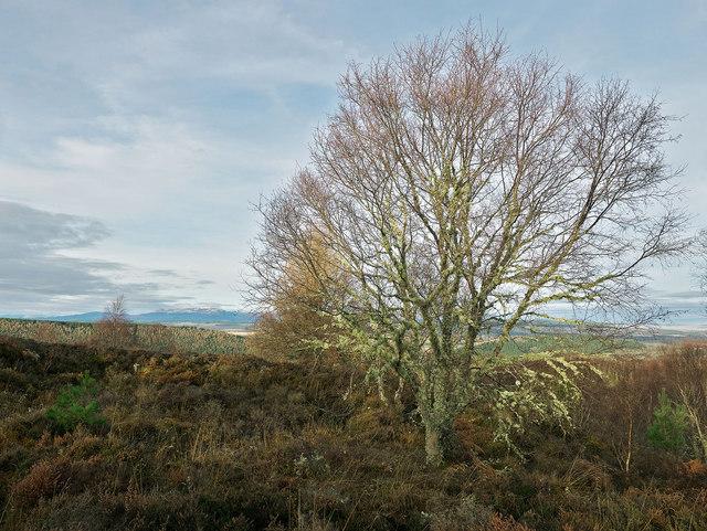 On the ridge of Taindore Wood