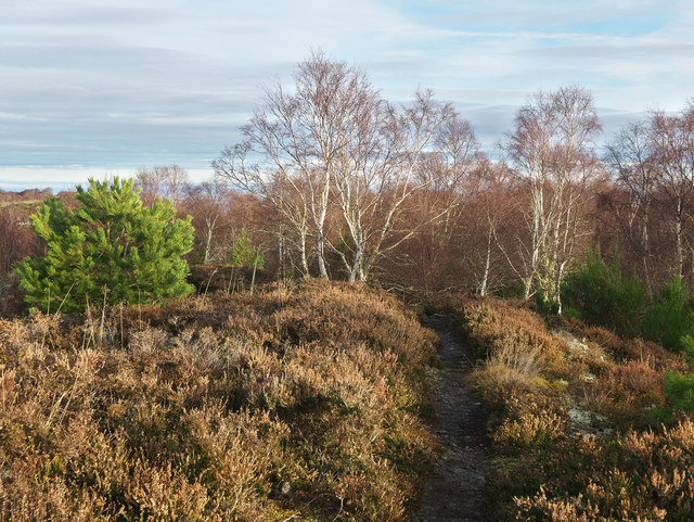 Footpath along the crest of Taindore Wood