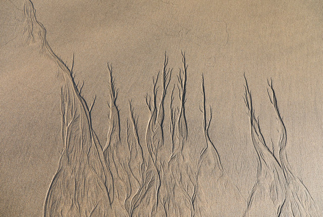 Rivulets in the sand