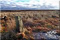 NZ6413 : Stanghow Moor by Mick Garratt