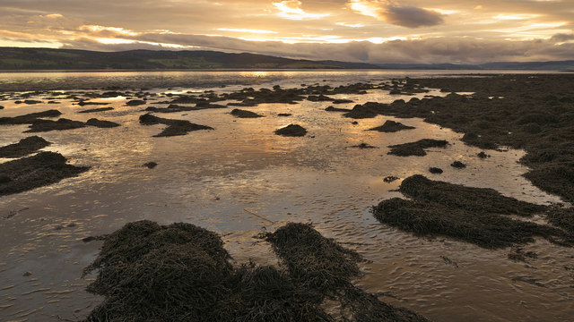 Mud and seaweed of the Beauly Firth