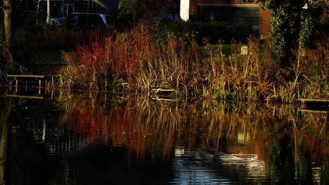 Colourful vegetation around pond by New Hall Farm, Gawsworth