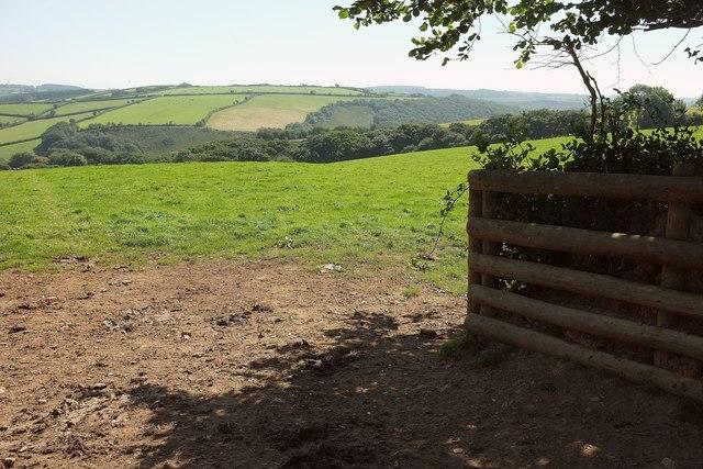 Pasture by Tawna Downs