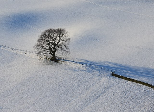 Lone tree, Bellanrigg