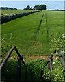 SK8831 : Steps leading down to farmland by Mat Fascione