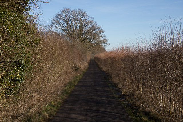 Narrow road near Rooksgrove Farm