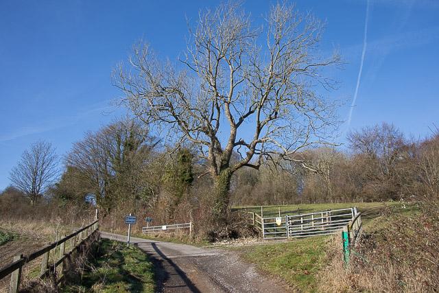 Bridleway above Wheely Down Farm