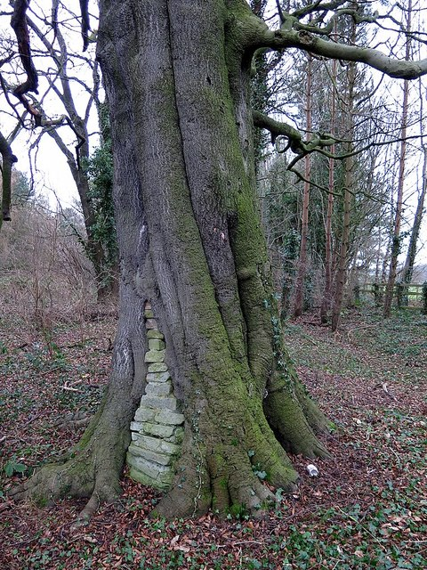 Walled-up tree, Tyne riverside