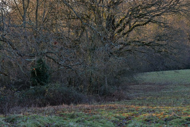 Penhurst: Creep Wood