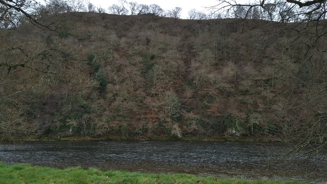 Looking across the River Tweed to the steep wooded lower bank of Bemersyde Hill